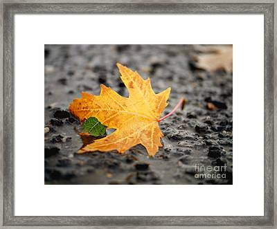 Touch Of Green Framed Print by Irina Wardas