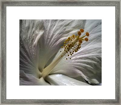 Touch Of Pink Framed Print by Jill Balsam