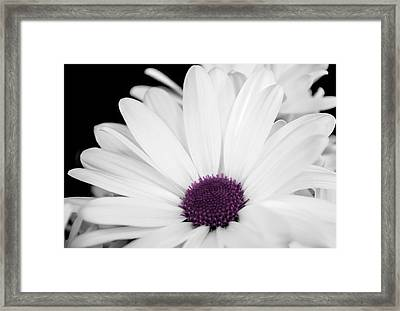 Touch Of Purple Framed Print by Xenia Headley