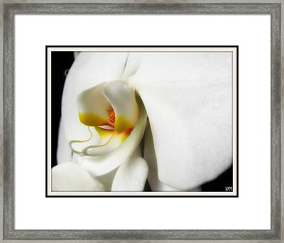 Framed Print featuring the photograph Touch Of Yellow by Heidi Manly
