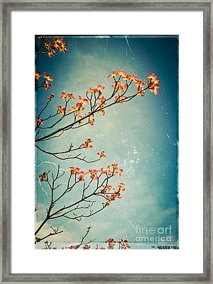 Touch The Sky Framed Print by Colleen Kammerer