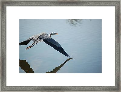 Touch The Water With A Wing Framed Print