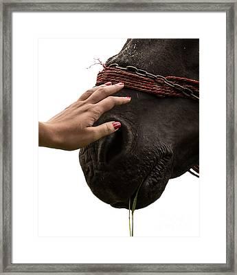 Touch Framed Print by Vlad Dobrescu