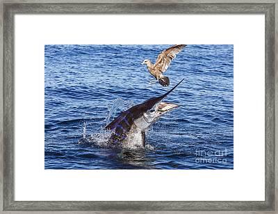 Touche Framed Print by Scott Kerrigan