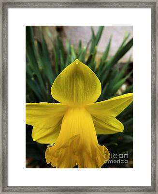 Framed Print featuring the photograph Touched By An Angel by Robyn King