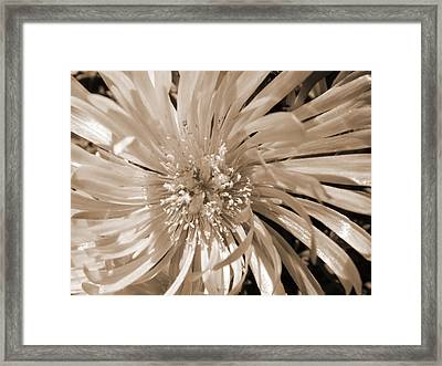 Touched By Light Framed Print by Leana De Villiers