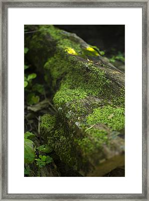 Touched By Nature Framed Print by Michael Williams