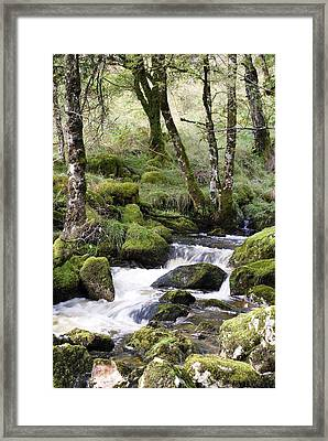 Touched By Sunshine 2 Framed Print by Wendy Wilton