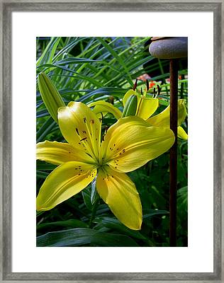 Touched By The Sun Framed Print by Larry Jones