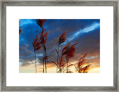 Touched By The Sunset Framed Print