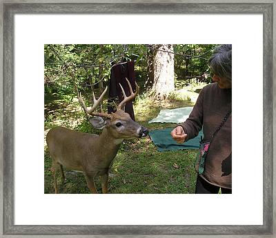 Touchy Feely Buck Framed Print