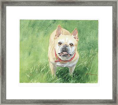 Tough Little Dog Watercolor Portrait Framed Print by Mike Theuer