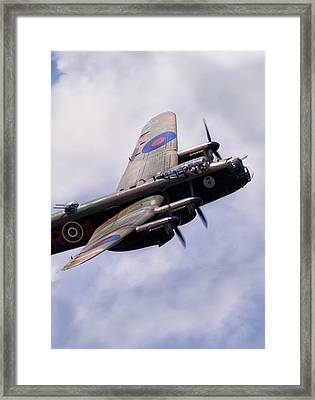 Tough Old Bird Framed Print by Peter Chilelli