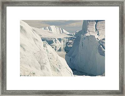 Tourist Boat Trips Sail Through Icebergs Framed Print by Ashley Cooper
