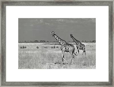 Tourists Spend Framed Print