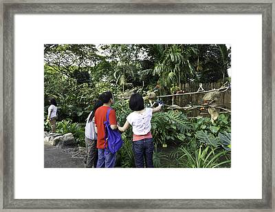 Tourists Viewing The Colorful Birds Framed Print