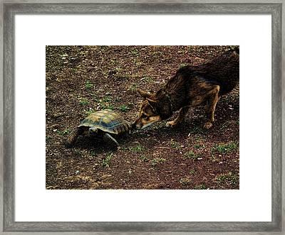 Framed Print featuring the digital art Tourtoise 2 by Robert Rhoads