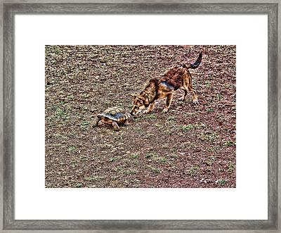 Framed Print featuring the digital art Tourtoise  by Robert Rhoads