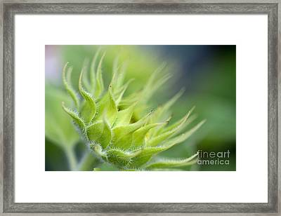 Toward The Light Framed Print by Annette Cohen