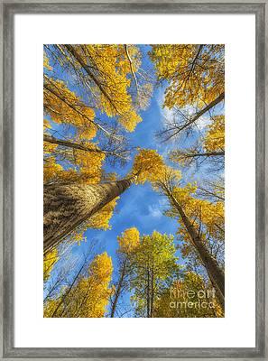 Towards The Blue Sky Framed Print