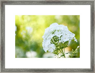 Towards The Sun Framed Print
