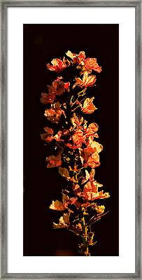 Tower Bloom Framed Print by Leif Sohlman
