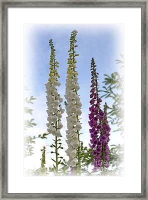 Towering Foxglove Framed Print