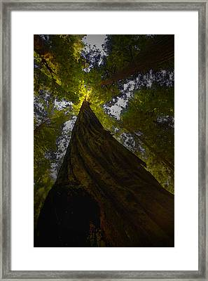 Towering Giants Framed Print