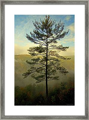 Framed Print featuring the photograph Towering Pine by Suzanne Stout