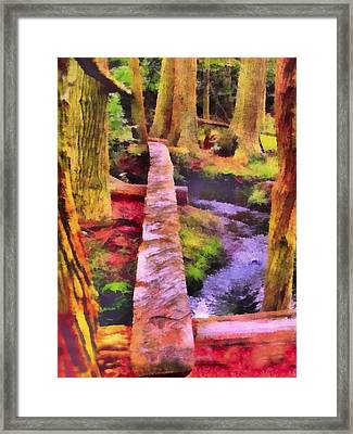 Towering Red Cedar Trail Framed Print by Rick Todaro