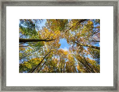 Framed Print featuring the photograph Towering Trees. by Gary Gillette