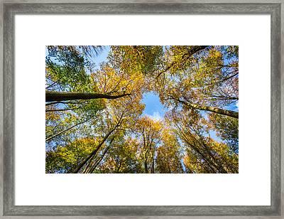 Towering Trees. Framed Print