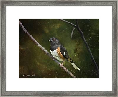 Towhee Waiting For Sunrise Framed Print by J Larry Walker