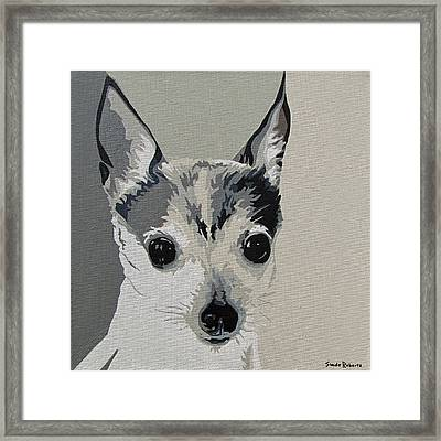 Toy Fox Terrier Framed Print by Slade Roberts