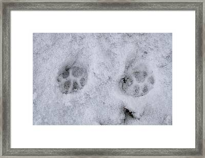 Traces Of A Cat In The Snow Netherlands Framed Print by Ronald Jansen