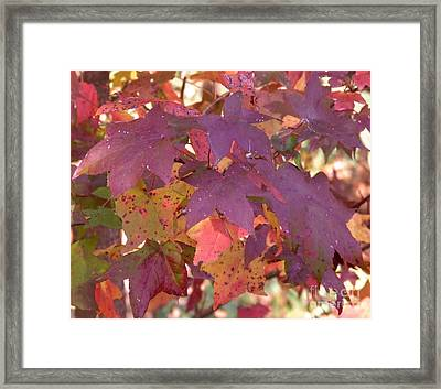Framed Print featuring the photograph Traces Of Fall by Andrea Anderegg