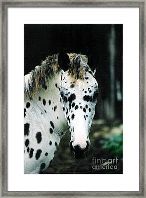 Tracker Framed Print