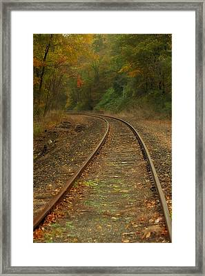 Tracking Thru The Woods Framed Print by Karol Livote