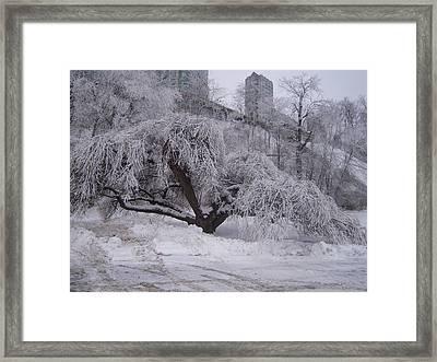 Tracks By A Tree Framed Print by Anastasia Konn