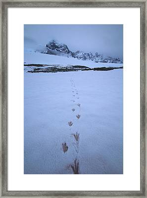 Tracks In The Snow Framed Print by FireFlux Studios