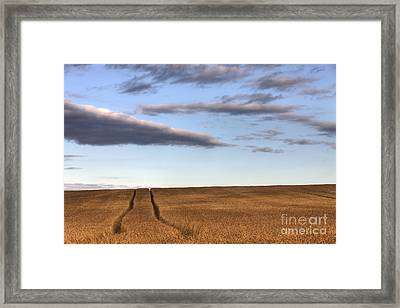 Tracks In The Wheat Framed Print