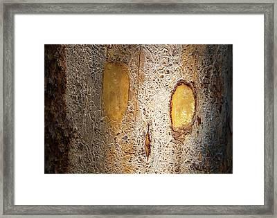 Tracks Left By Bark Beetles Framed Print