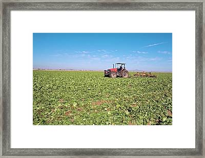Tractor Clearing A Field Framed Print by Jim West