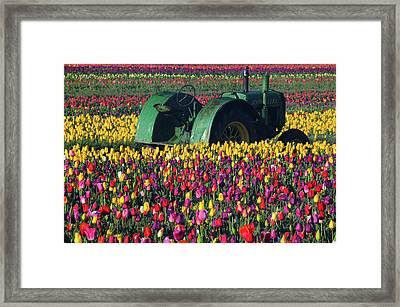 Tractor In The Tulip Field, Tulip Framed Print
