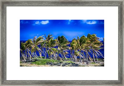 Trade Winds Framed Print by Stephen Stookey