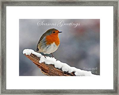 Traditional Christmas Robin Framed Print by Paul Scoullar