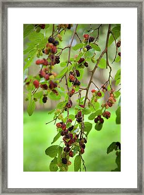 Traditional Foods Such As Berries Framed Print by Angel Wynn