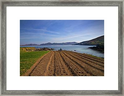 Traditional Poato Farming ,near Dursey Framed Print by Panoramic Images