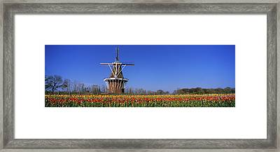 Traditional Windmill In A Tulip Field Framed Print