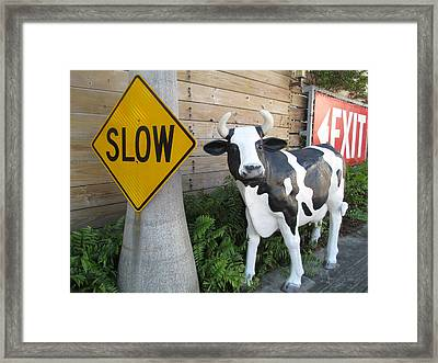 Traffic Cow Framed Print